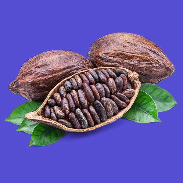 Cocoa Market Size, Price, Demand, Outlook, Forecast Report