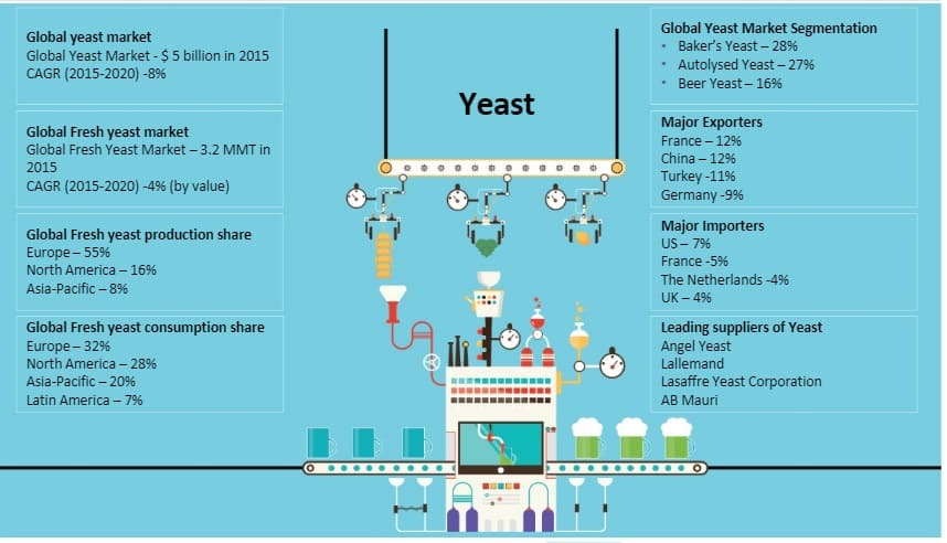yeast-and-enzymes