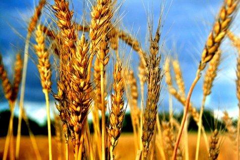 Supplies Soft Red Winter Wheat 2016 U.S. floods